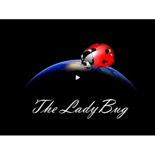 The Ladybug by Hugo Valenzuela